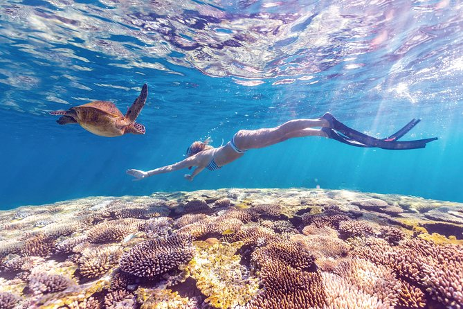 7-Day Exmouth Explorer via The Pinnacles Monkey Mia & Ningaloo Reef Perth Return