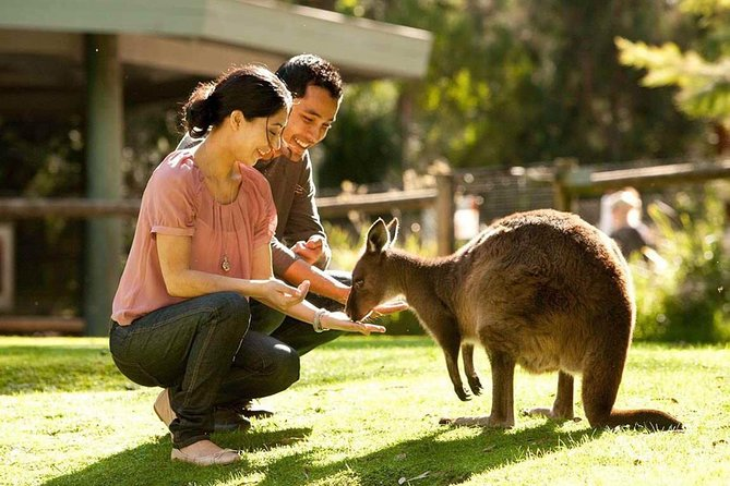 Very Best of Perth Tour - Wildlife Park  City Highlights Tour - Carnarvon Accommodation
