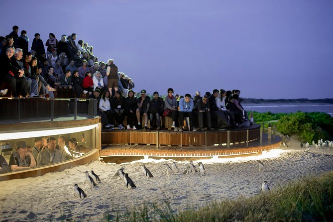1 Day Private Phillip Island Tour VIP Charter up to 9 People - Carnarvon Accommodation