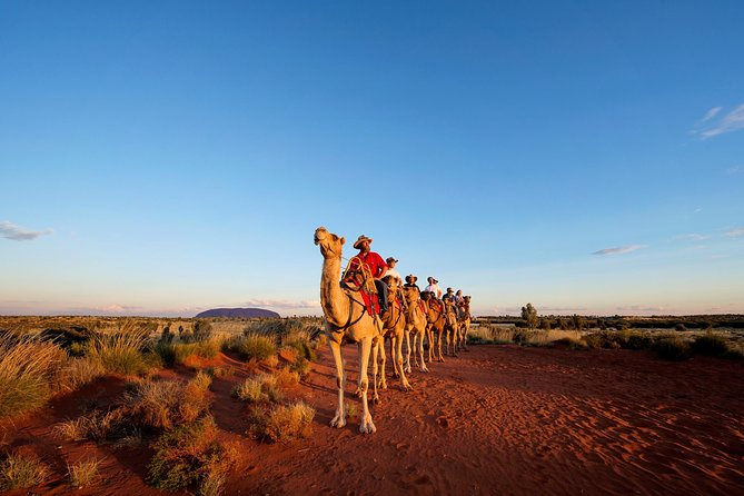 Uluru Camel Express Sunrise or Sunset Tours - Carnarvon Accommodation