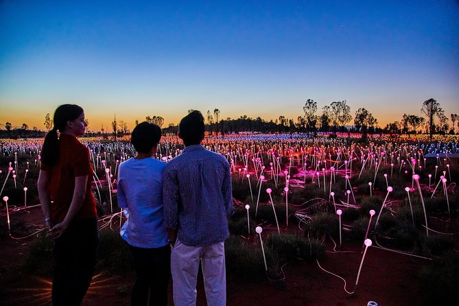 Uluru Field of Light Sunrise Tour - Carnarvon Accommodation
