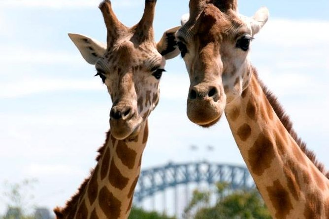 Sydney Harbour Ferry with Taronga Zoo Entry Ticket - Carnarvon Accommodation