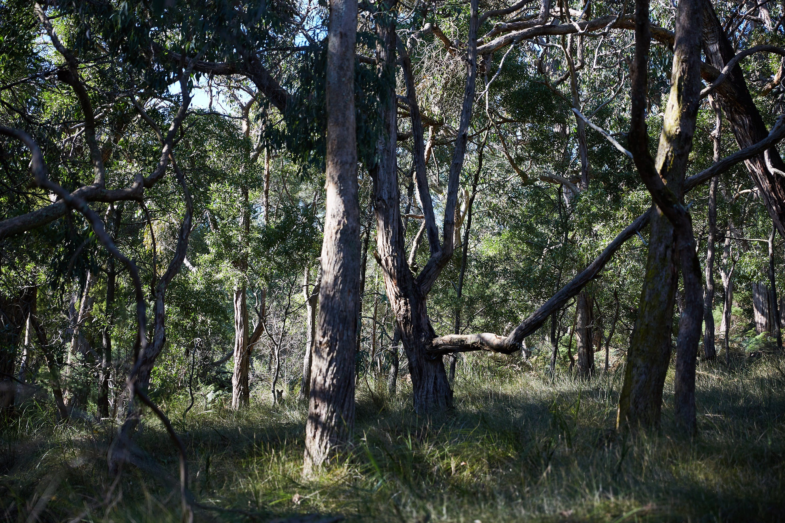 Green's Bush Long Circuit Walk - Carnarvon Accommodation