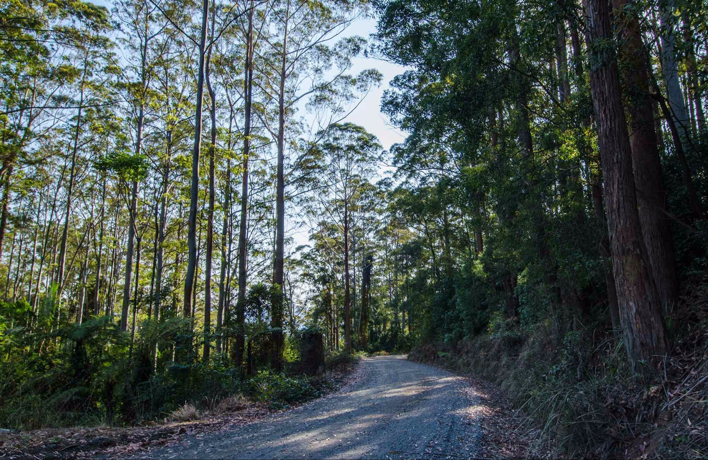 Hastings Forest Way Touring Route - Carnarvon Accommodation