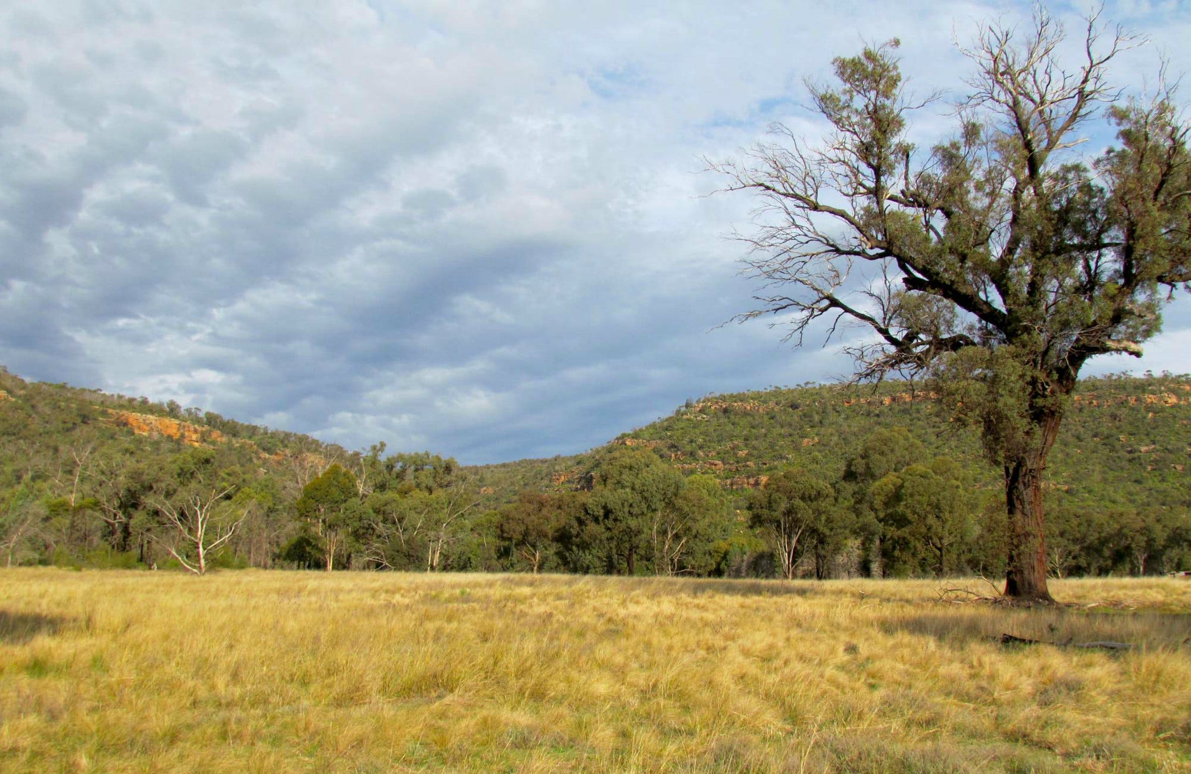 Weddin Mountains National Park - Carnarvon Accommodation