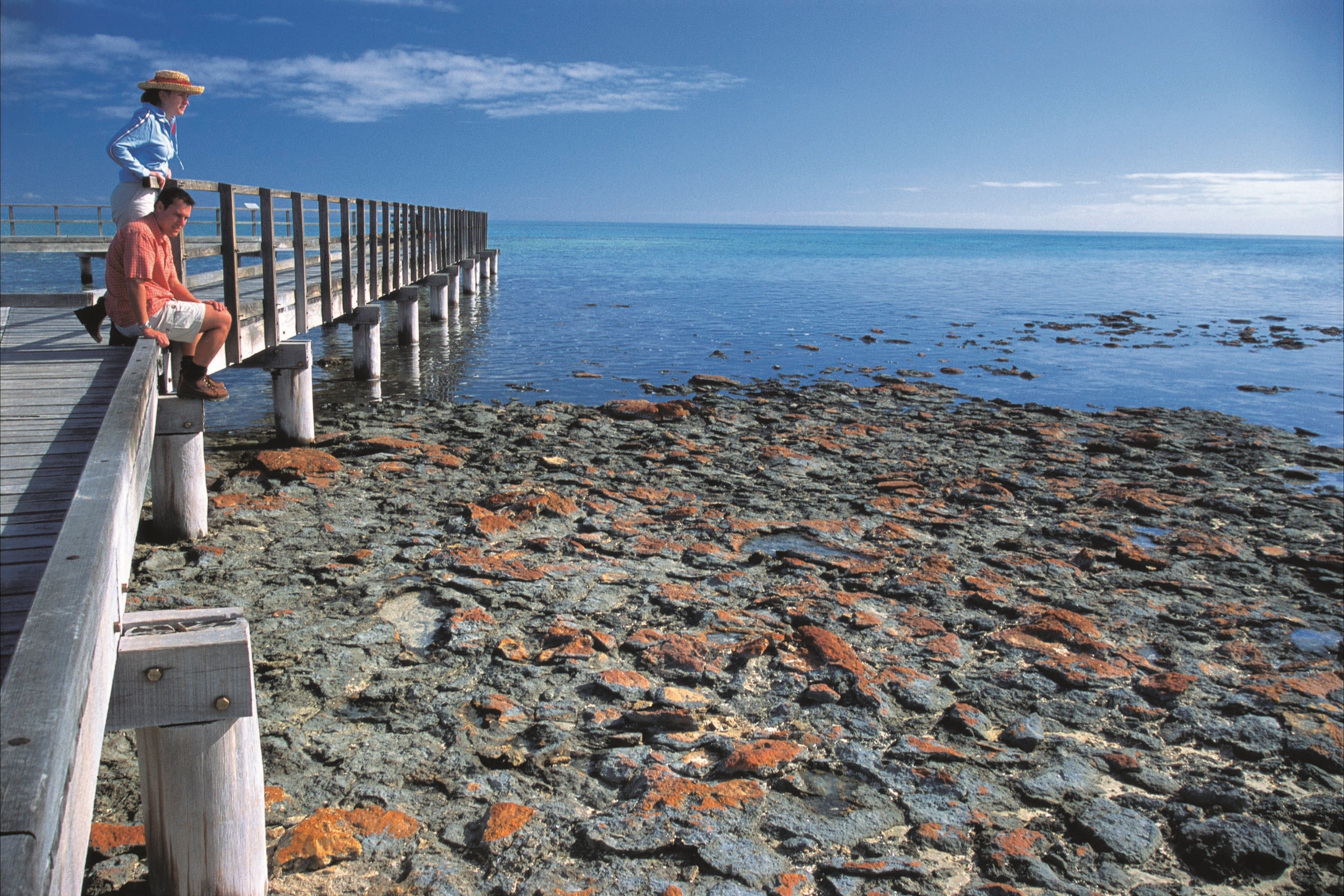 Hamelin Pool Stromatolites - Carnarvon Accommodation