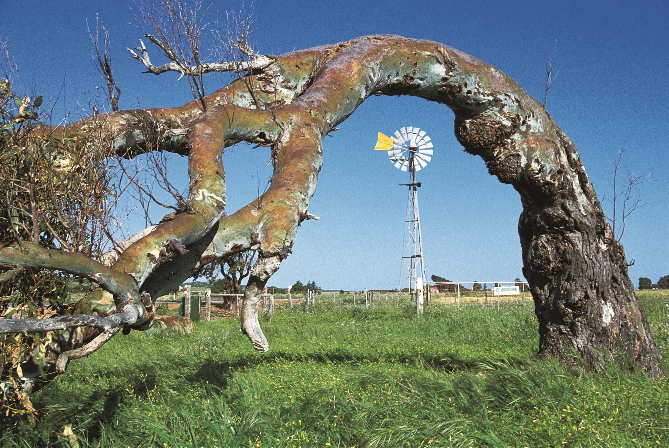 Greenough Leaning Trees - Carnarvon Accommodation