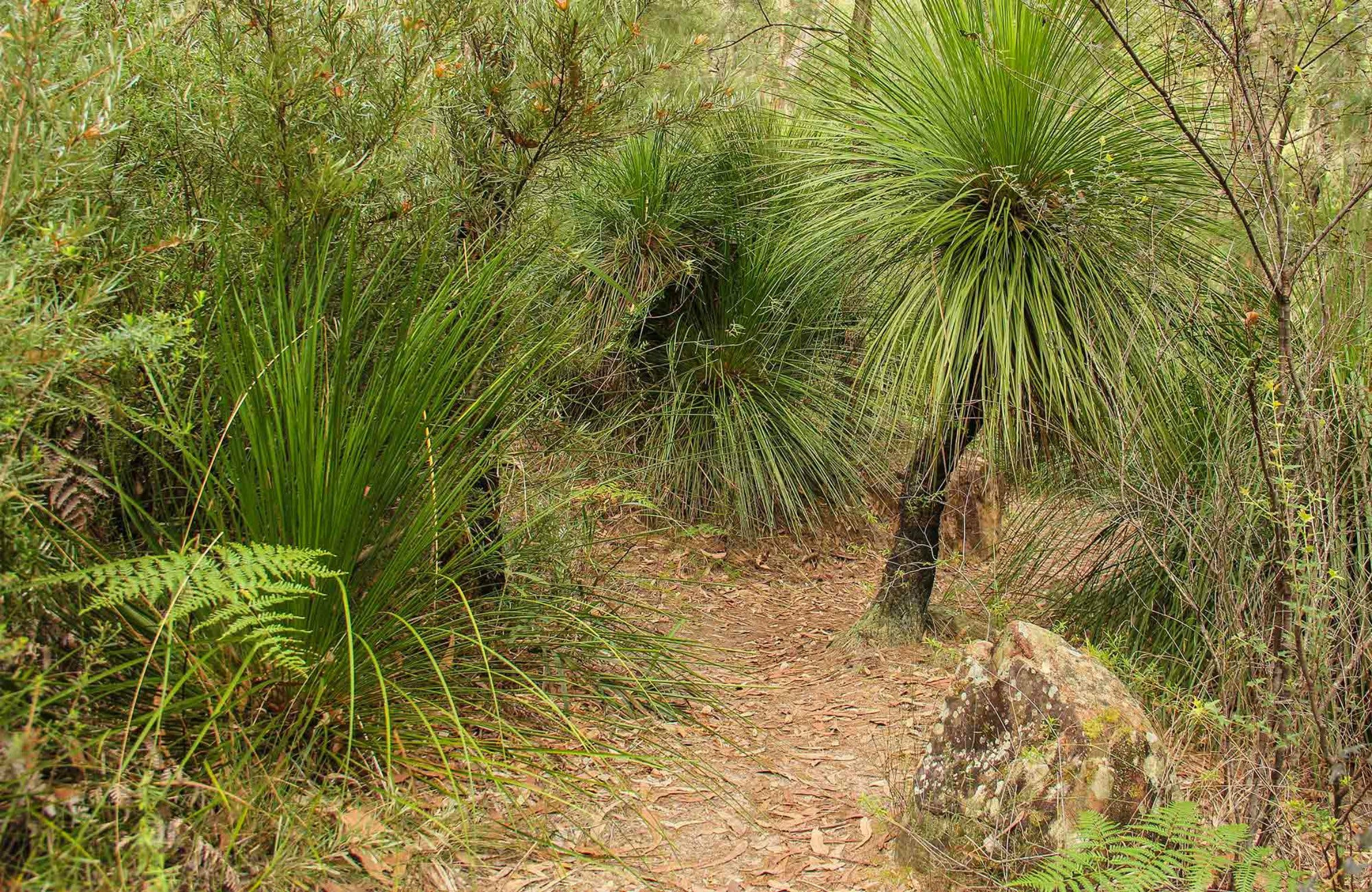 Grass Tree Circuit - Carnarvon Accommodation