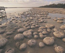 Lake Clifton Thrombolites - Carnarvon Accommodation