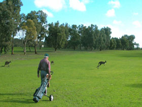 Coffin Bay Golf Club - Carnarvon Accommodation