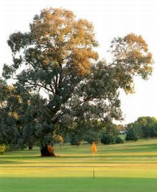 Cowra Golf Club - Carnarvon Accommodation