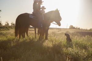 Balonne Cutting Horse Futurity - Carnarvon Accommodation