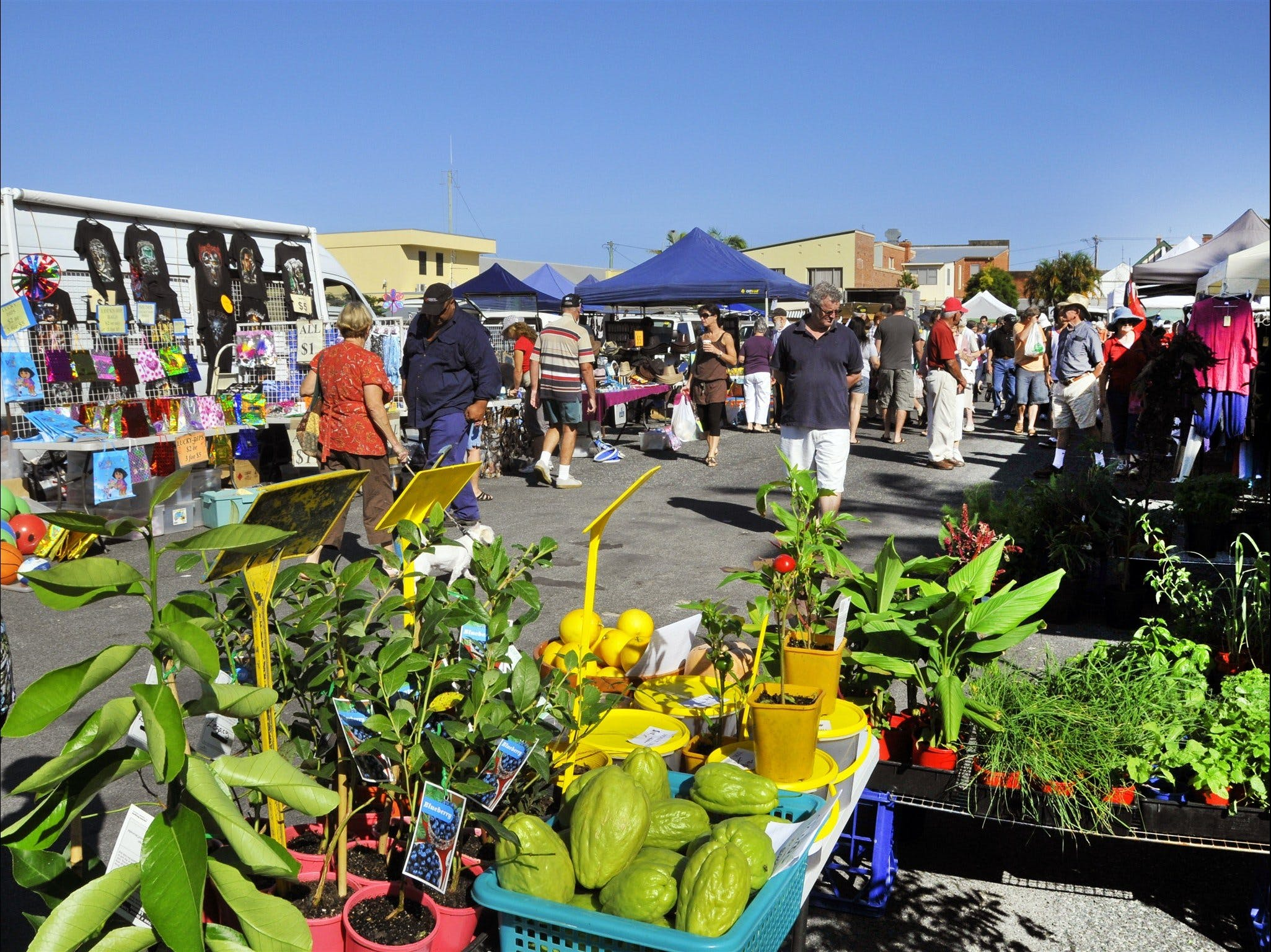 Maclean Community Monthly Markets - Carnarvon Accommodation