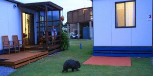 BIG4 Kelso Sands Holiday  Native Wildlife Park - Carnarvon Accommodation